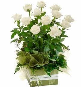 Композиция белых роз