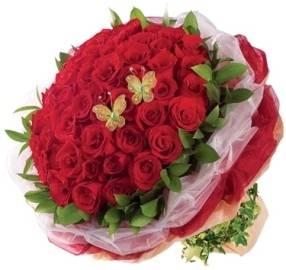 77 Elegant Roses