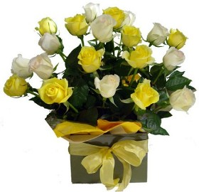 27 White and Yellow Roses