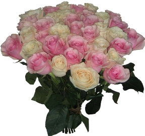 25 Pink & White Roses