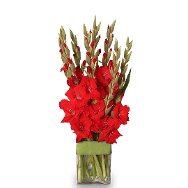 Red Beauty in Vase