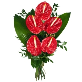Shining Red Anthuriums