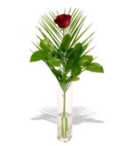 Exqusite Red Rose