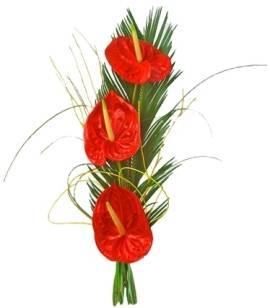Anthuriums Trio Bouquet