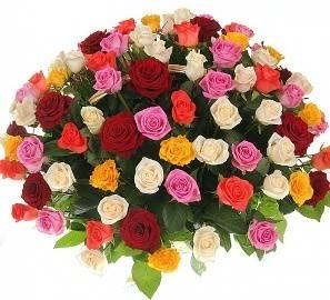 101 Fashionista Colorful Roses