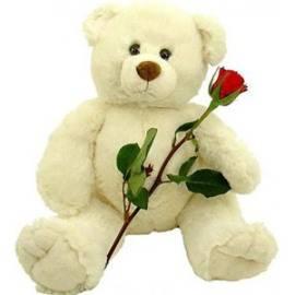 A Red Rose & Teddy Bear