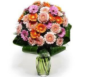 Bouquet of 37 Gerberas