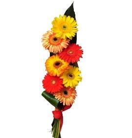 Очарвательные Цвета