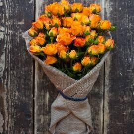 Blushing Orange Beauty