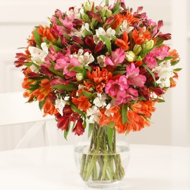 71 Colorful Blooms in Vase