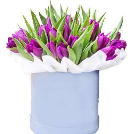 Purple tulips in box