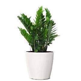 Eco Gift