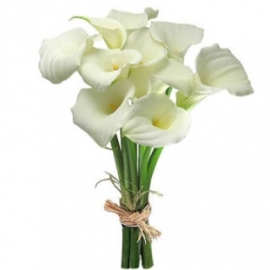 Pure Beauty of Callas