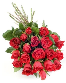 25 Stunning Roses