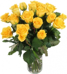Stunning Yellow Roses