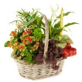 Garden Pleasures Basket