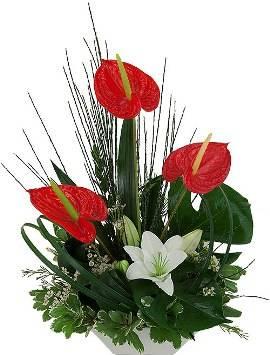 Floral Mixture