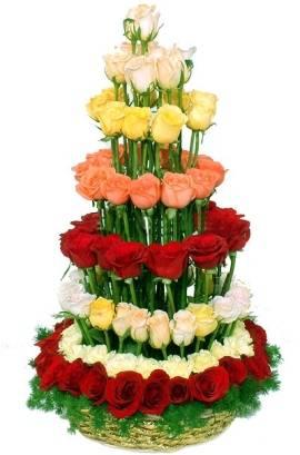 Desirable Circle of 155 Roses