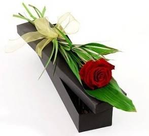 Одна Роза в Подарочной Коробке