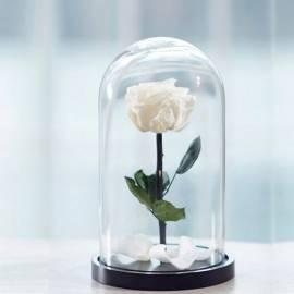 Eternal White Rose