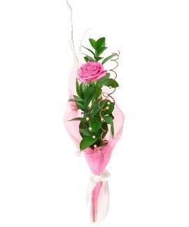 Одна розовая роза
