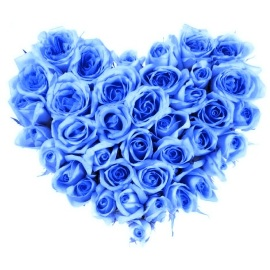 The Blue Heart of 77 Roses