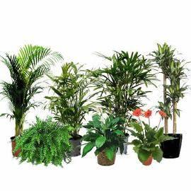 Домашний Сад из 7 Видов Растений