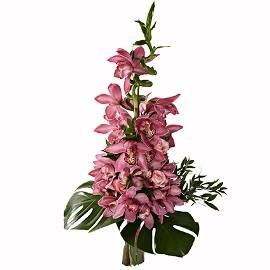 Грандизный Букет из Орхидей