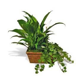 Blooming Green Basket