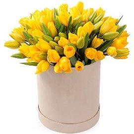 77 Sunny Yellow Tulips