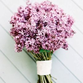 Country Lilacs