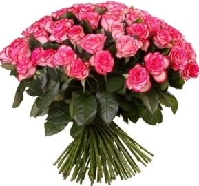 51 Adorable Pink Roses