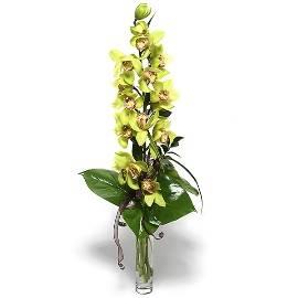 Magic of Orchids