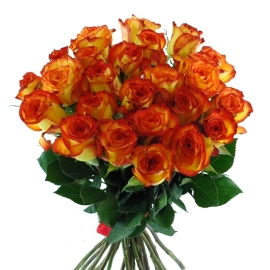 Yellow-Orange Roses