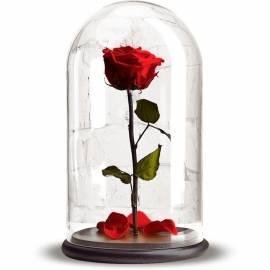 Неувядающая Красная роза в колбе