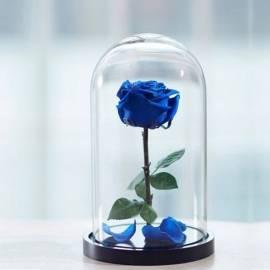 Eternal Blue Rose