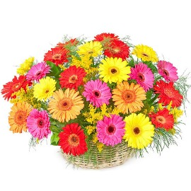 Blooming Basket of Gerberas
