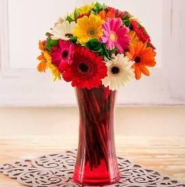 Bouquet of 17 Bright Gerberas