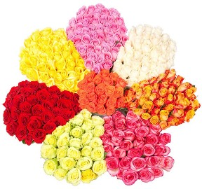 Colorful Collage of 301 Roses