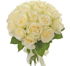 Snow-White Roses