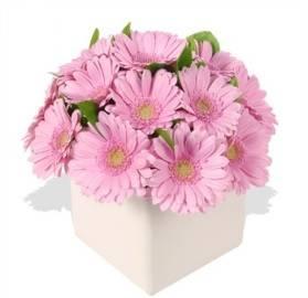 Розовые Герберы в Вазе
