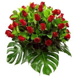 51 Wonderful Red Roses
