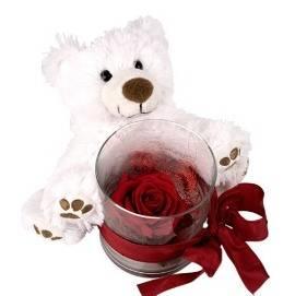 Teddy & Red Rose