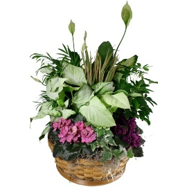 Touch of Spring Basket