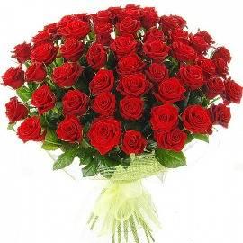77 Brilliant Red Roses