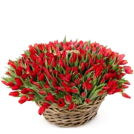 225 Tulips in a Basket