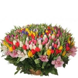 Royal Tulip  Basket